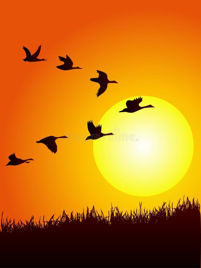 Vuelo salvaje del ganso en puesta del sol libre illustration