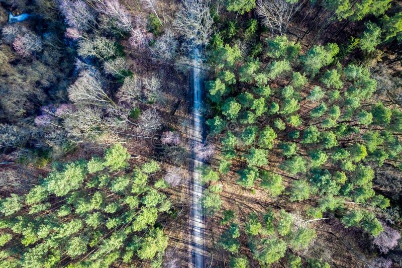 Vuelo sobre el bosque maravilloso con los árboles multicolores, Polonia fotografía de archivo
