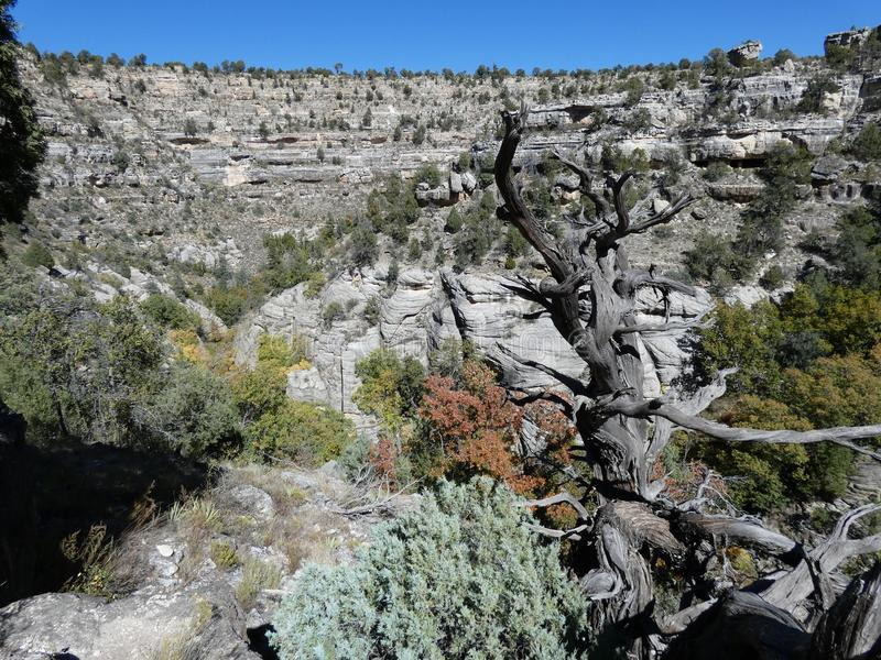 Vues de canyon de noix image libre de droits