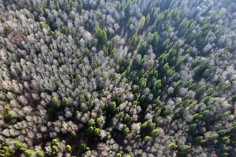 Vues de champ et forêt et arbres de sapin de la vue d'oeil d'oiseaux image stock