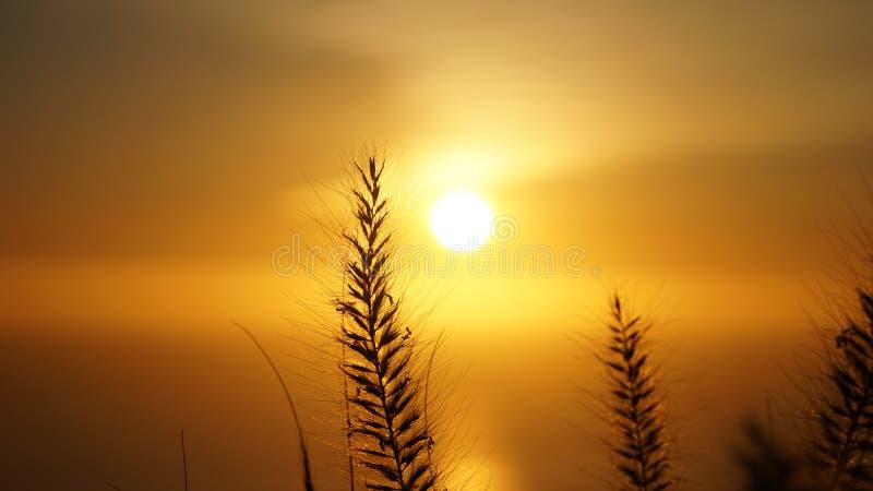 Vues de coucher du soleil de colline de signal à Cape Town, Afrique du Sud images libres de droits