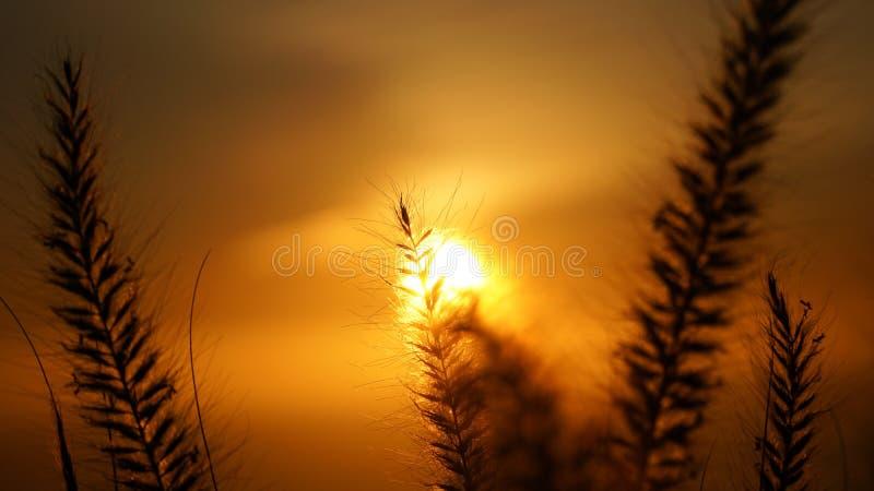 Vues de coucher du soleil de colline de signal à Cape Town, Afrique du Sud photographie stock