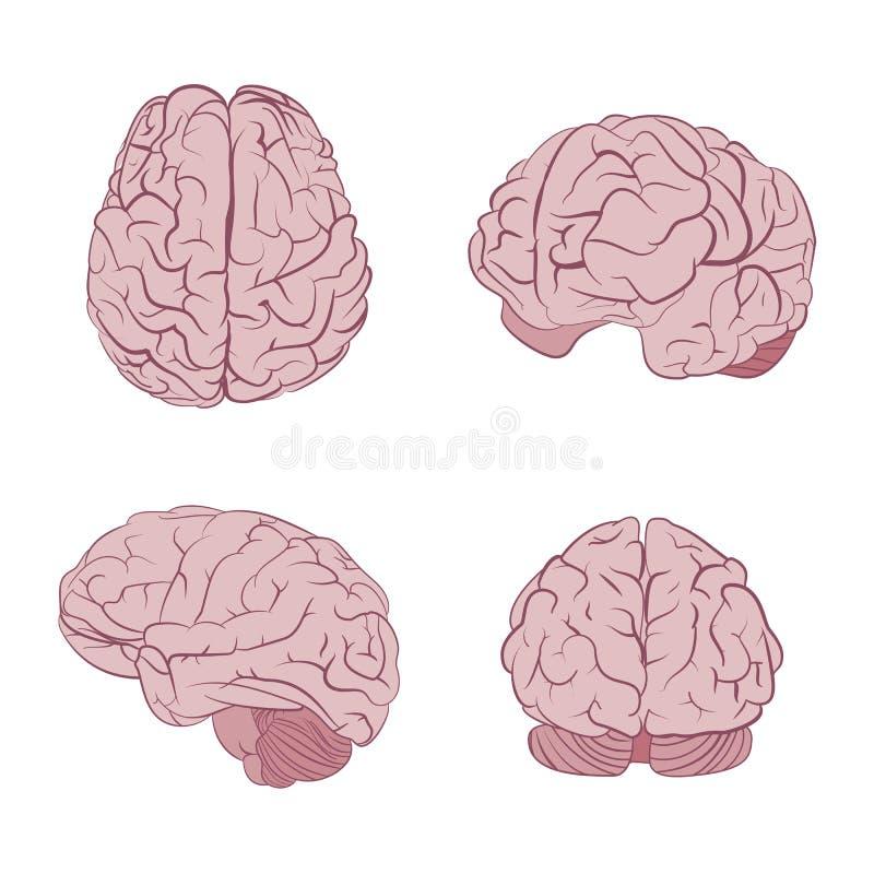 Vues de l'esprit humain quatre Dessus, bandeau, côté, de trois quarts Icônes plates de vecteur de cerveaux illustration libre de droits