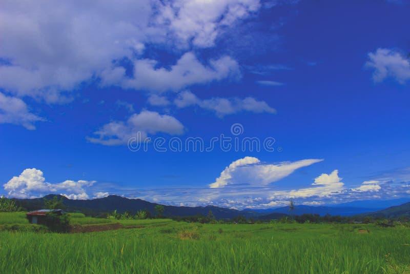 Vues douces des gisements de riz de village photographie stock