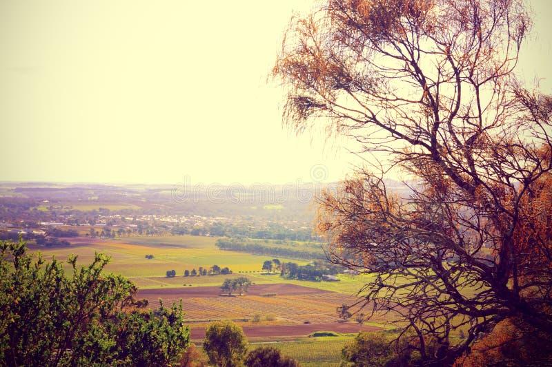 Vues scéniques donnant sur la vallée Barossa photo libre de droits