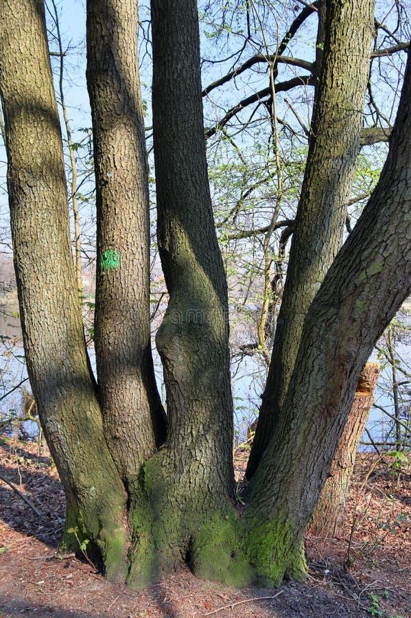 Vues scéniques sur de beaux paysages européens de forêt photo stock
