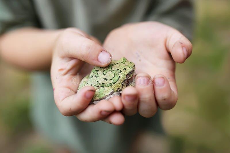 Vuile Handen van Little Boy die Gray Treefrog houden stock afbeelding