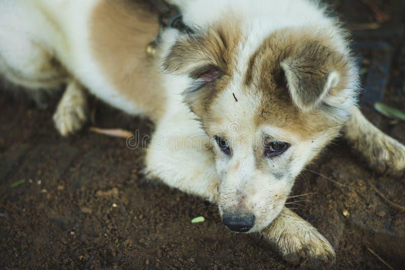 Vuile hond of Siberisch schor het spelen zand in het park royalty-vrije stock afbeeldingen