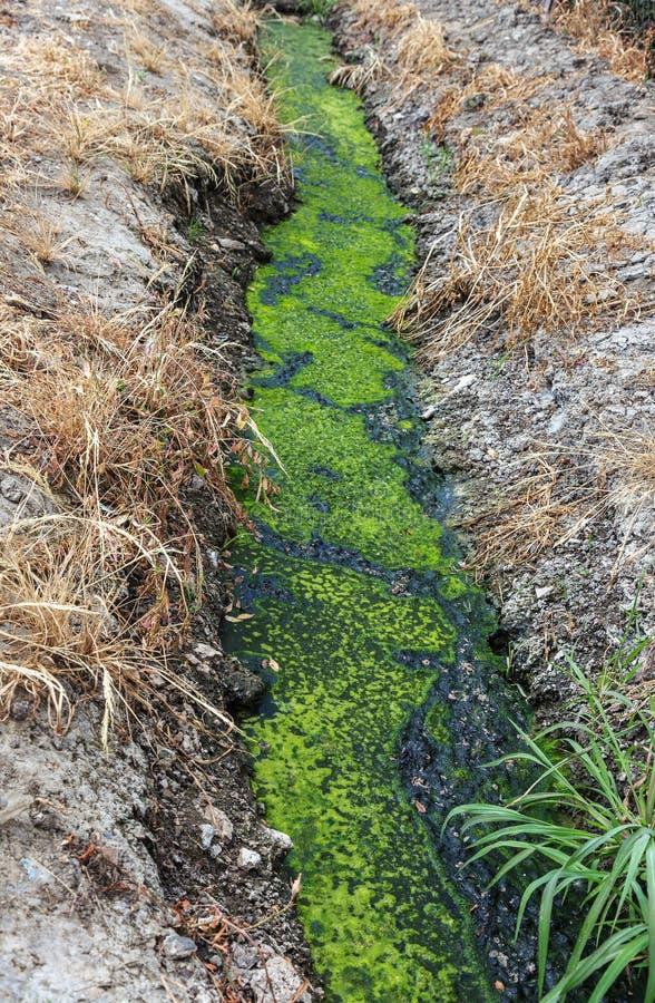 Vuile riolering samen met riolering in een open sloot langs de straat Vuile drainage, een open rioolcollector hier met giftige al stock fotografie