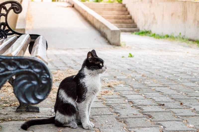 Vuile zwart-witte gekleurde verdwaalde kattenzitting dichtbij een bank stock fotografie
