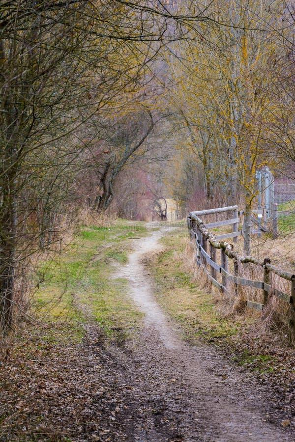 Vuilweg in Wilde de Aardlan van Forest Woods Daytime Walk Strolling stock foto's