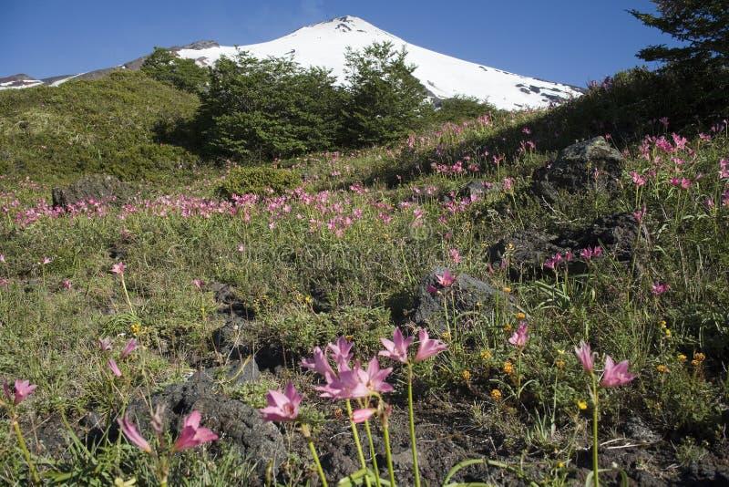 Vulcão ativo de Villarrica fotos de stock