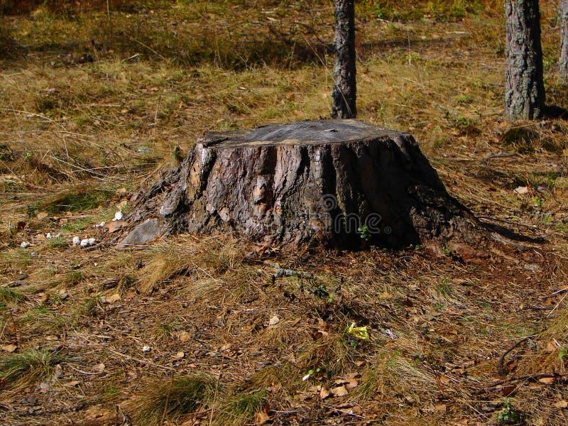 Vulcão de madeira fotografia de stock