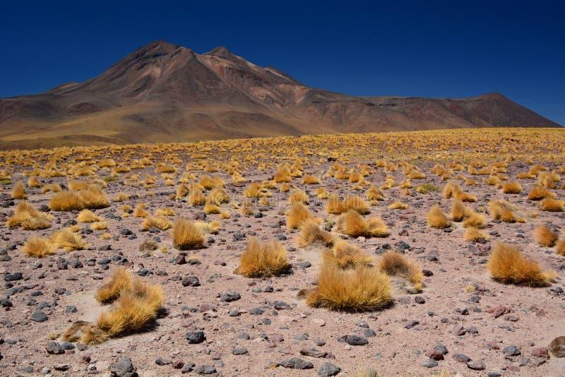 Vulcão de Miniques Região de Antofagasta chile imagens de stock royalty free