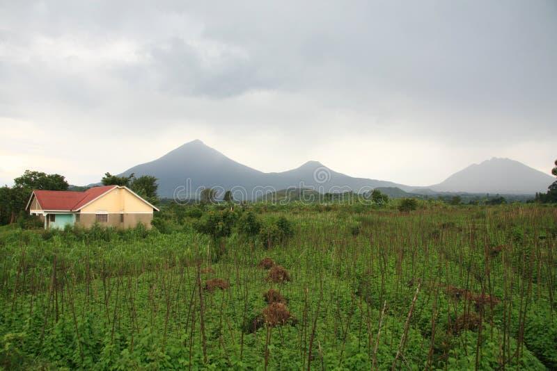 Vulcões em Kisoro, Uganda imagem de stock royalty free