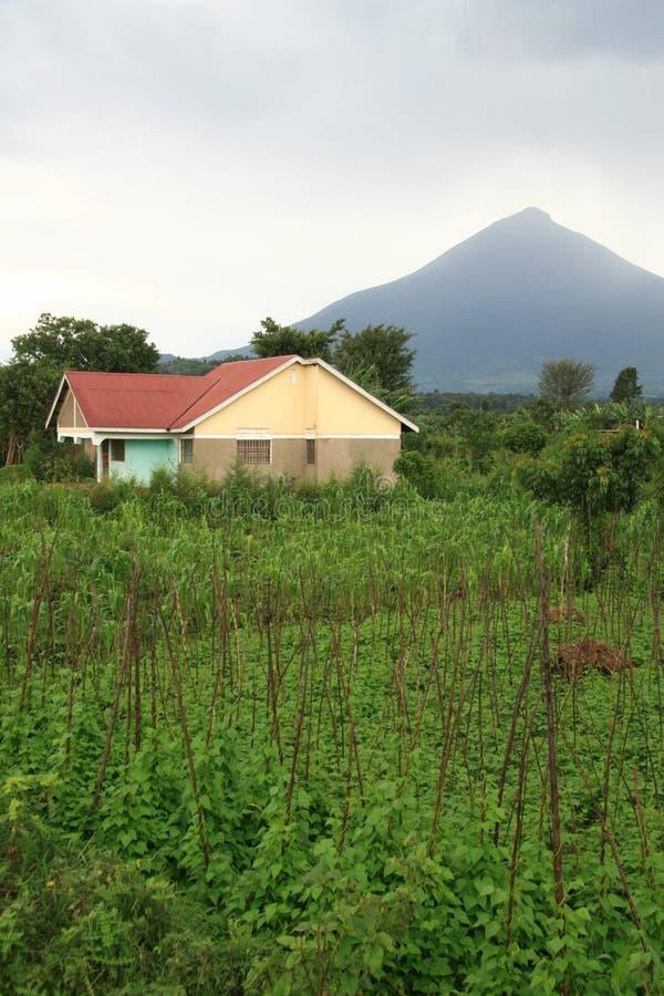 Vulcões em Kisoro, Uganda fotografia de stock royalty free