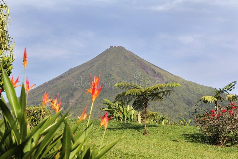 Vulcano di Arenal con i fiori immagine stock libera da diritti