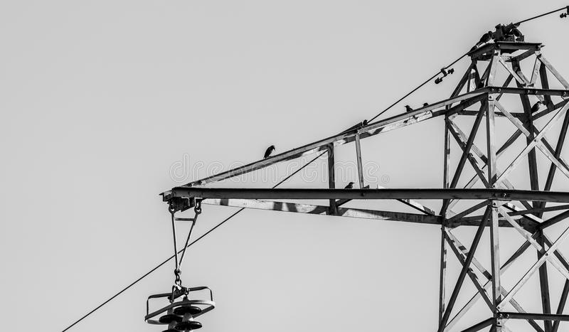 Vulgaris de Storn Sturnus d'oiseaux étendu sur un acier image libre de droits