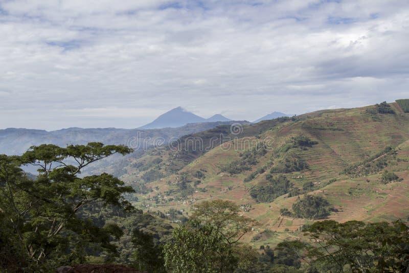 Vulkanen Nationaal Park over hellingslandschap Rwanda, Afrika royalty-vrije stock foto's