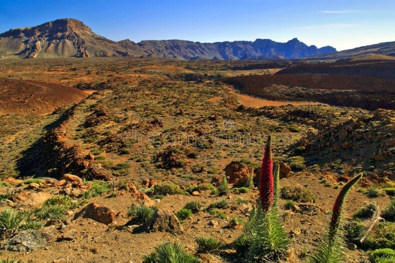 Vulkanische Landschaft des Teide Volcano National Park stockbild