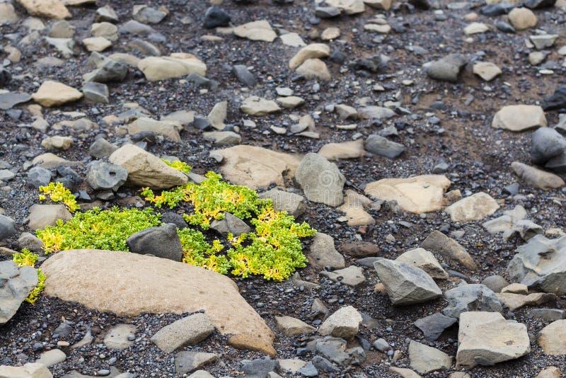 vulkanische Steine auf Oberfläche von Kirkjufjara setzen in Island auf den Strand stockfoto