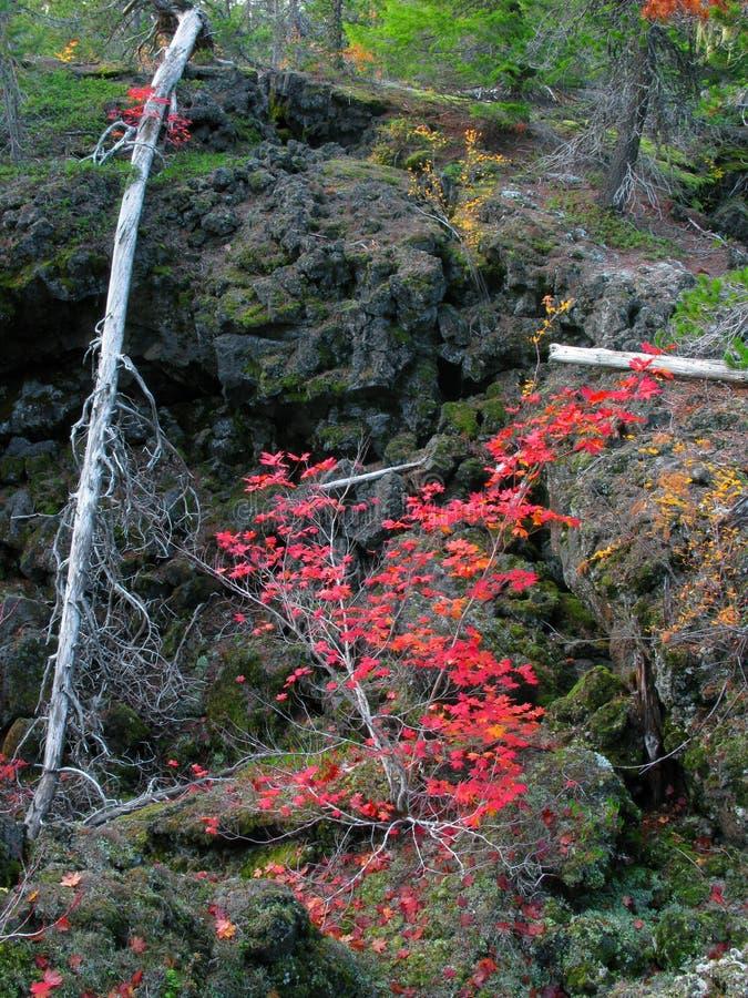 Vulkanisk Lava Beds & nedgångfärg arkivfoton
