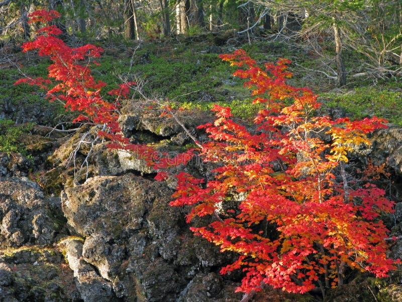 Vulkanisk Lava Beds & nedgångfärg royaltyfria foton