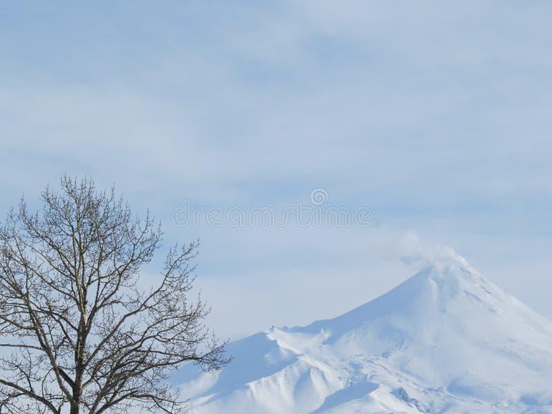 Vulkaniskt landskap för härlig vinter av den Kamchatka halvön: sikt av den aktiva Klyuchevskoy för utbrott vulkan på soluppgång E royaltyfri foto