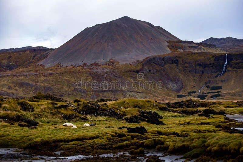 Vulkaniskt landskap på Budir på den Snaefellsnes halvön, Island royaltyfria bilder