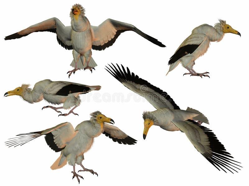 Vulture stock illustration