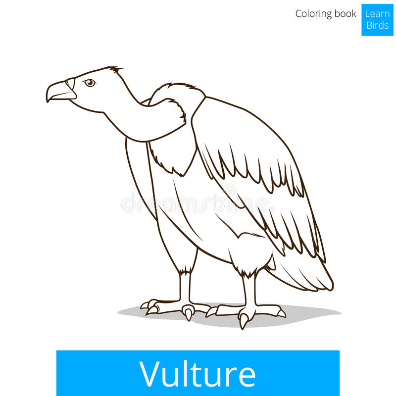 Vulture Bird Learn Birds Coloring Book Vector Stock Vector ...