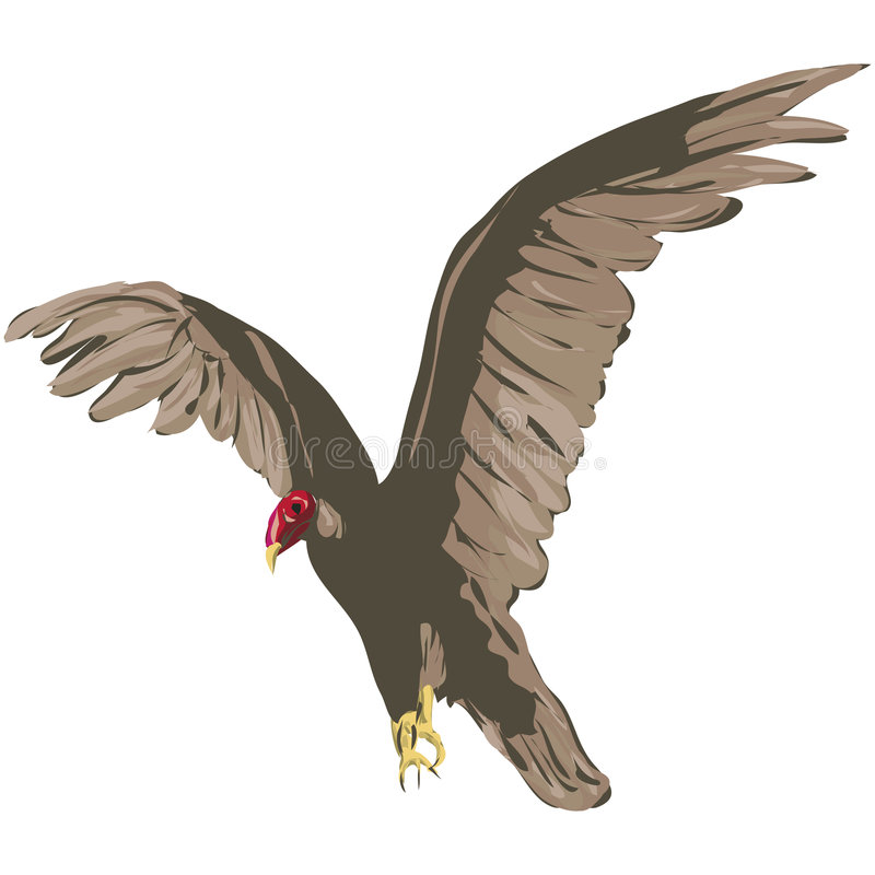 Download Vulture with clipping path stock illustration. Image of brown - 621108