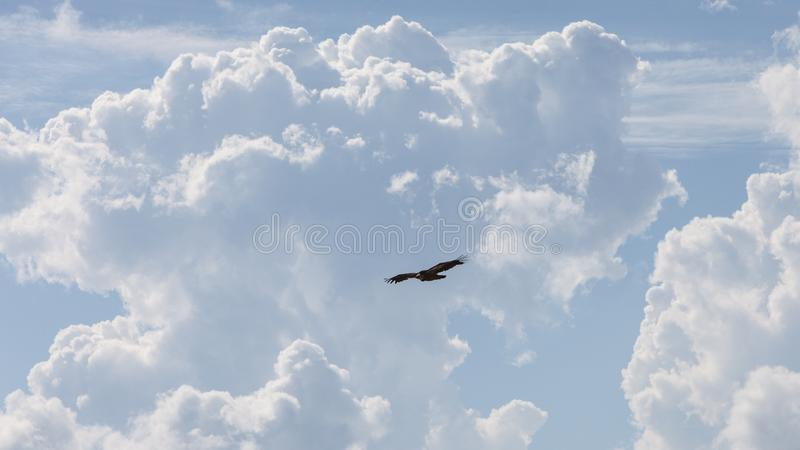 Vulture with huge heap clouds on sunny day royalty free stock images
