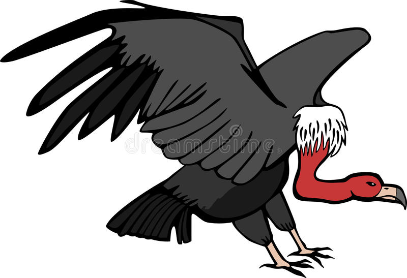 Vulture royalty free illustration
