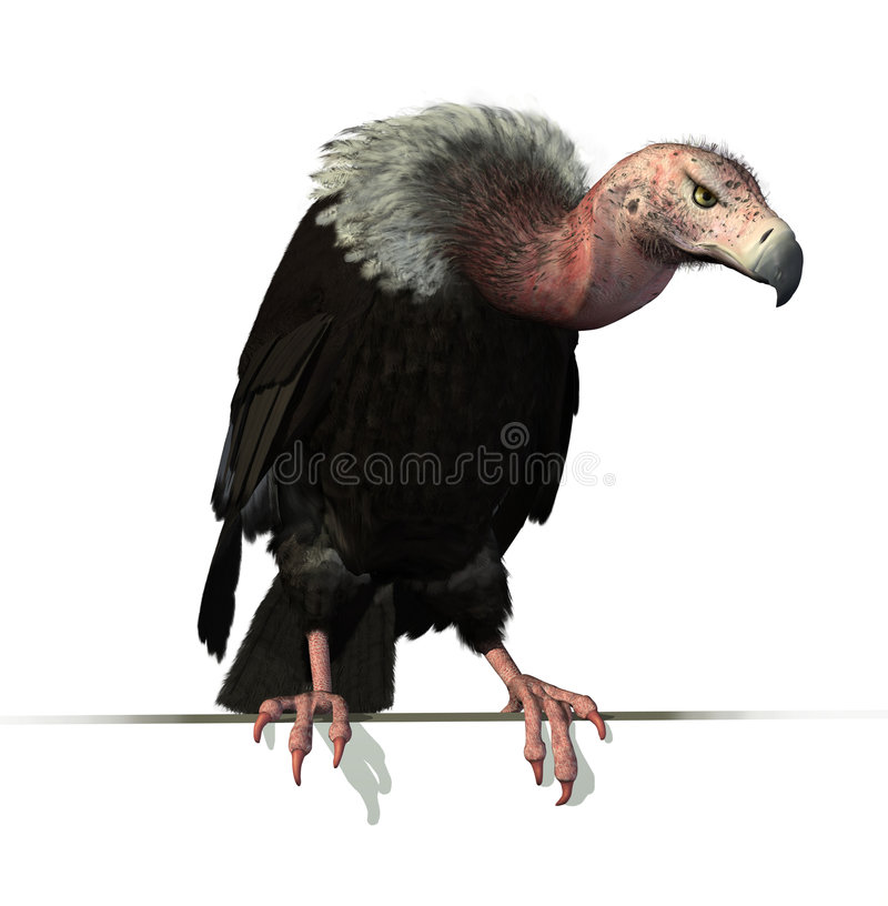 Download Vulture Perched on an Edge stock illustration. Illustration of spooky - 8854462