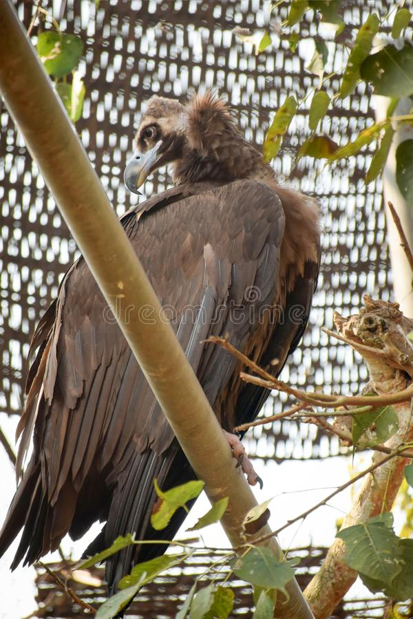 Vulture is in Zoo. stock image