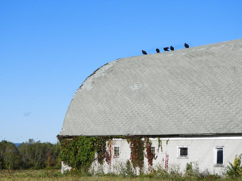 Vulture Roof Stock Photos Download 90 Royalty Free Photos