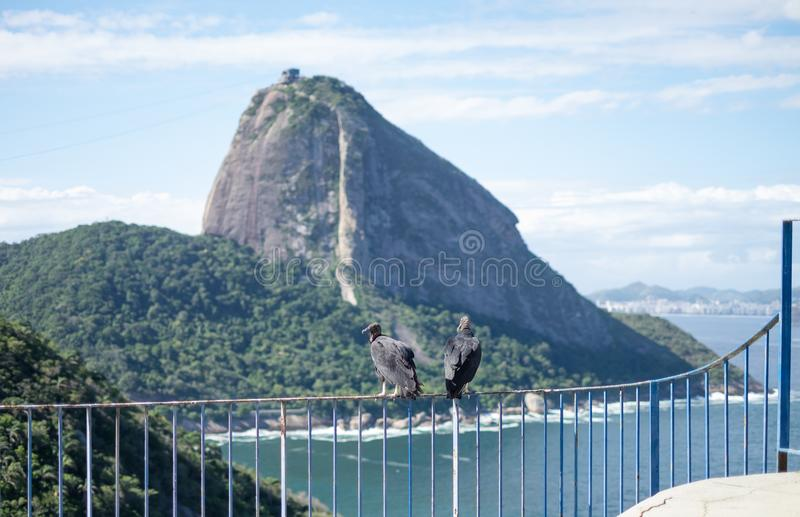 Vultures and Sugarloaf, Rio de Janeiro, Brazil royalty free stock photos