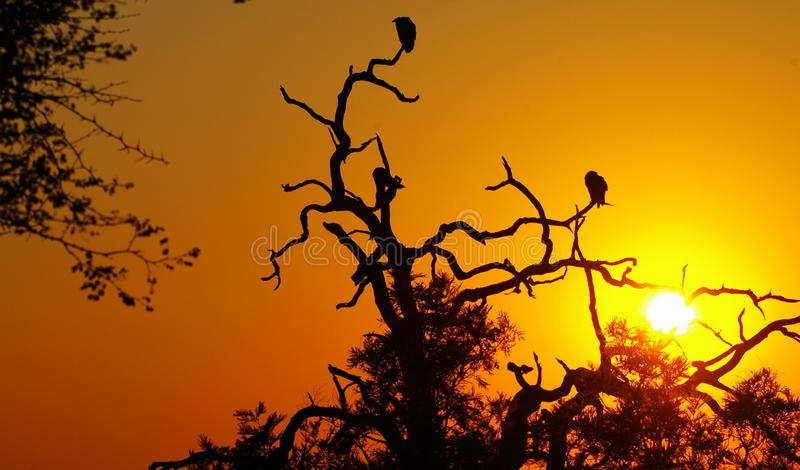 Download Vultures at sunset stock photo. Image of silhouettes, black - 6165038