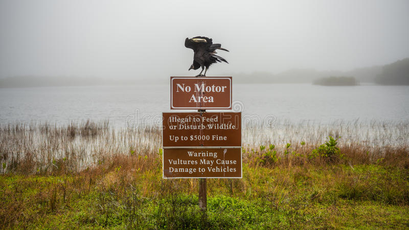 Vultures warning sign in the Everglades National Park, Florida. Vultures warning sign with a vulture on top of it in the Everglades National Park, Florida stock images