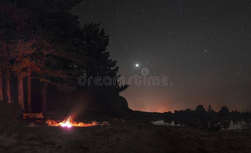 Vuur op de rand van het bos onder de sterren stock fotografie