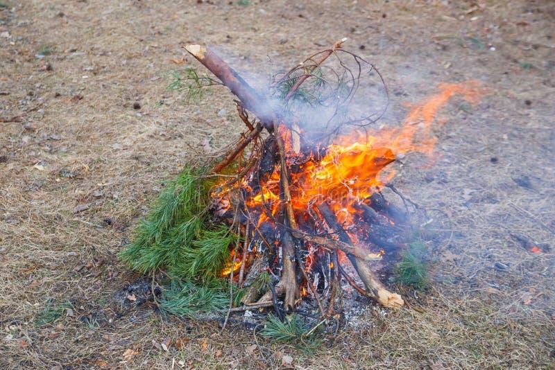 Vuur van pijnboomtakken in het de lentebos stock foto