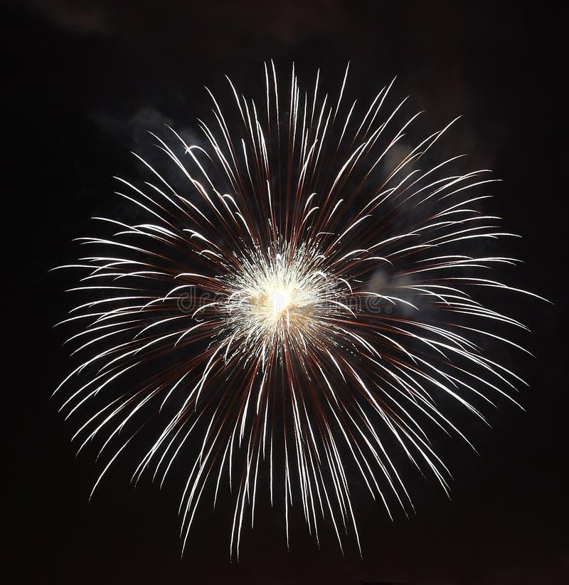 Vuurwerkbloem stock fotografie