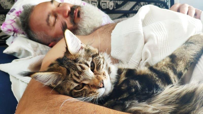 Vuxen brutal skäggig man för närbild som sover i morgonen med den Maine Coon kattungen, hem- komfortbegrepp, selektiv fokus fotografering för bildbyråer