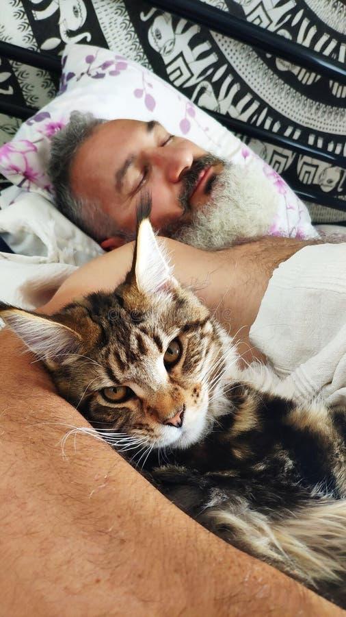 Vuxen brutal skäggig man för närbild som sover i morgonen med den Maine Coon kattungen, hem- komfortbegrepp, selektiv fokus royaltyfria foton