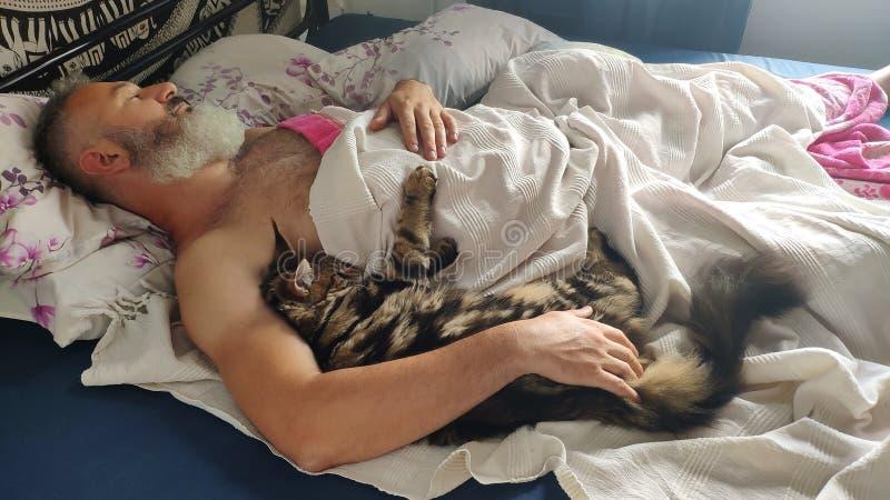 Vuxen brutal skäggig man som sover i morgonen med den Maine Coon kattungen, hem- komfortbegrepp, selektiv fokus arkivbild
