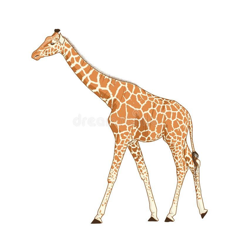 Vuxen djur realistisk detaljerad teckning för giraff royaltyfri illustrationer
