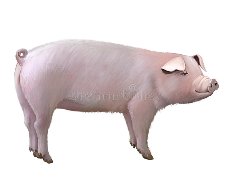 Vuxen stor pig royaltyfri illustrationer