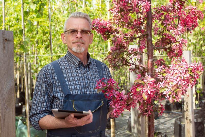Vuxen trädgårdsmästare nära blommorna Händerna som rymmer minnestavlan I exponeringsglasen ett skägg, bärande overaller I trädgår royaltyfria foton