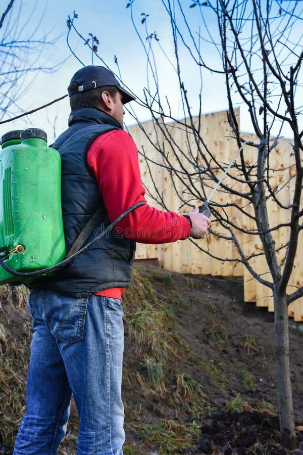 Vuxna män som besprutar fruktträd tidigt i sprigtime royaltyfria foton